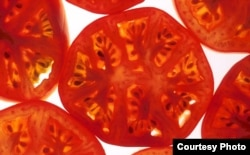 The tomato is the latest important food crop to yield its genetic secrets (Scott Bauer/USDA)