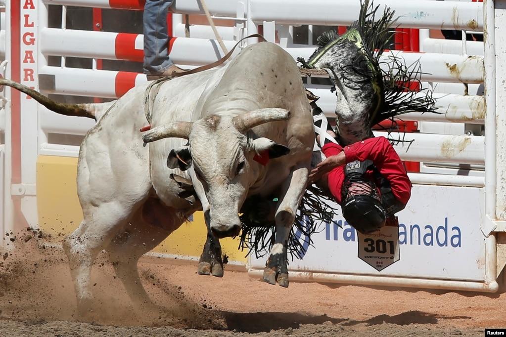 卡加利牛仔节(Calgary Stampede),奔牛和牛仔(2017年7月7日)。卡加利牛仔节是每年7月在加拿大亚伯达省卡加利(简称卡城)举行的博览会和牛仔竞技,为期十日,年度入场人数超过100万人次。
