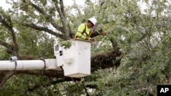 A worker trims branches from trees near power lines in a downtown neighborhood in hopes of averting power outages in Orlando, Fla. during preparation for the arrival of Hurricane Irma, Friday, Sept. 8, 2017.