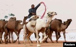 Seorang laki-laki bersorak sambil mengendarai unta dalam Festival Unta Raja Abdulaziz di Wilayah Rimah, timur laut Riyadh, Arab Saudi, 19 Januari 2018.