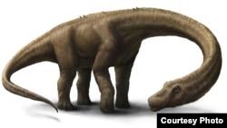 Artist rendering of Dreadnoughtus (Courtesy: Jennifer Hall)