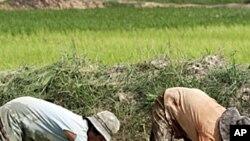 รายงานสำรวจล่าสุดชี้ว่าชาวกัมพูชาส่วนใหญ่พอใจกับทิศทางการพัฒนาประเทศ