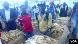 Abalimi base Tobacco Auction Floor. (Photo: Irwin Chifera)