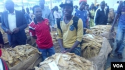 Tobacco auctioning started Wednesday in Harare. (Photo: Irwin Chifera)