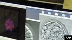 SHBA: Qeveria financon kërkimet me qeliza embrionale