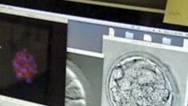 Klinikat me qeliza embrionale