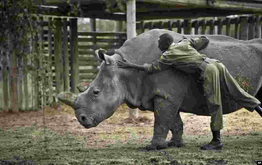 Kenya Dying Rhino Species