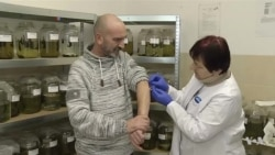 Reviving Traditional Treatment, Polish Company Breeds Leeches for Export