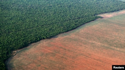 Amazon Deforestation Rising Under Brazil S Bolsonaro
