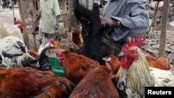 Un vendeur kényan vend des poulets sur le marché de Nairobi, Kenya, le 19 octobre 2005. (Photo d'illustration).