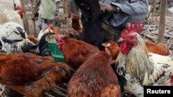 Des poulets à vendre à Nairobi, Kenya, le 19 actobre 2005.