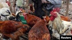 Un kéyan met ses poules à vendre dans un marché à Nairobi, Kenya, le 19 octobre 2005.