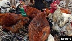 Veruzhinji vanokurudzirwa kuti vasadye huku dzinenge dzafa nechirwere che avian flu.