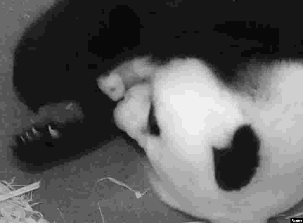 Giant panda Mei Xiang snuggles her cub at the Smithsonian National Zoo in Washington, D.C., USA. The cub, which has yet to be named, was born to 15-year-old panda Mei Xiang in the zoo and tests showed the father is 16-year-old Tian Tian of the same zoo.
