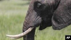Un élephant