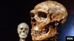 El hallazgo hace pensar que manejaban el fuego al igual que lo hacían los primeros humanos.