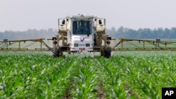 FILE - In this June 1, 2010 photo, central Illinois corn farmer Jerry McCulley sprays the weed killer glyphosate across his cornfield in Auburn, Ill.
