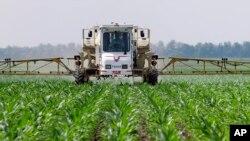 Photo à titre d'illustration uniquement: Un fermier pulvérise du glyphosate contre les mauvaises herbes dans son champ de maïs à Auburn dans l'Illinois le 1er juin 2010.