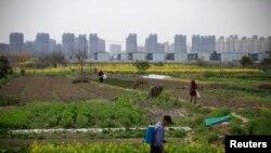上海居民楼建筑工地附近的农田(2016年3月21日)