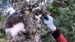 Կատուների համար նախատեսված փրկարարական խումբը միշտ պատրաստ է օգնության հասնել
