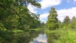 Национальным паркам США в этом году - на этой неделе - исполнилось 100 лет.