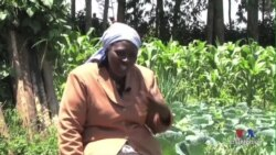 Kenya's Tea Farmers Brace for Climate Change
