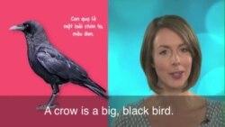Thành ngữ tiếng Anh thông dụng: As the crow flies (VOA)