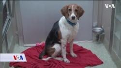 SAD: Usvojen zakonski prijedlog koji okrutnost prema životinjama tretira kao krivično djelo