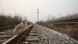 Клонирање на кучиња во Кина