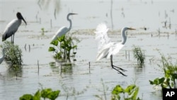 Water birds make use of a made wetland project near Fairfield, Texas.