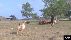 Kristian va Liza Texasdagi fermasida