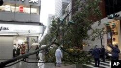 태풍 로키의 영향으로 나무가 쓰러진 도쿄 시내
