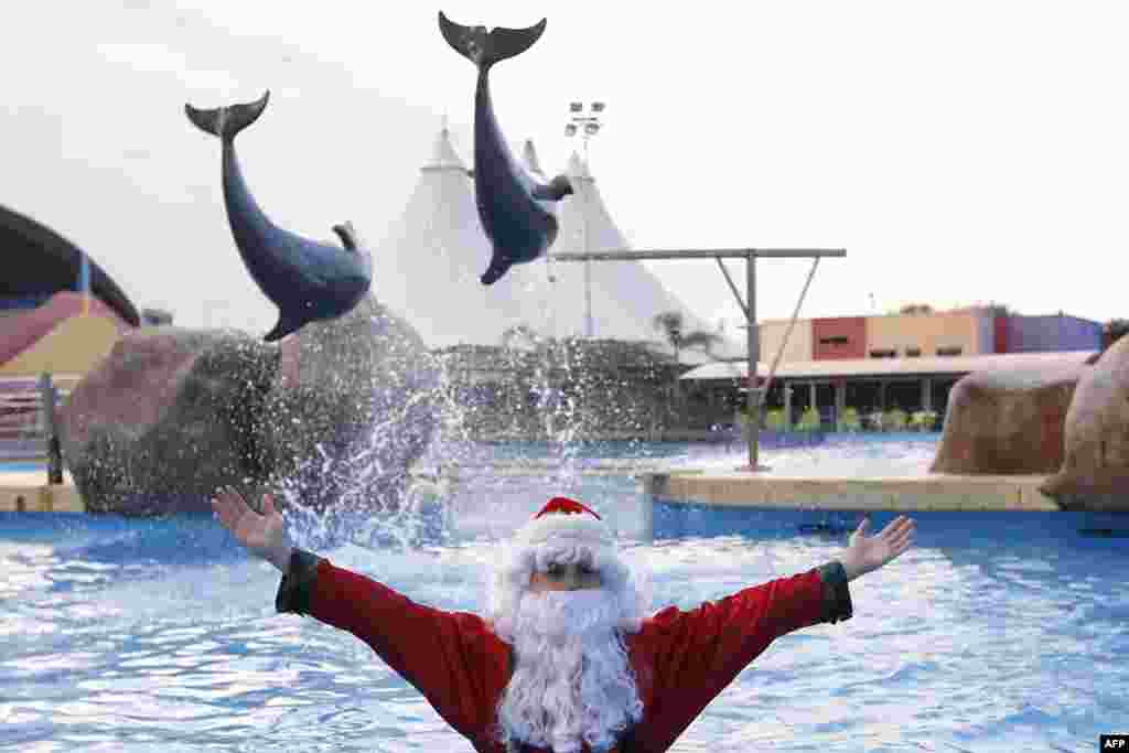 A man dressed as Santa Claus poses with dolphins at the Marineland animal exhibition park in the French Riviera city of Antibes, southeastern France.