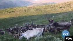 馴鹿與傳統:蒙古年輕人希望保住游牧文化