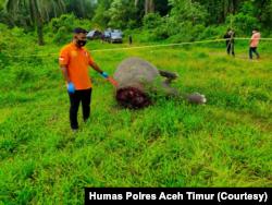 Bangkai gajah Sumatera yang ditemukan mati dengan kondisi tanpa kepala di Desa Jambo Reuhat, Kecamatan Banda Alam, Kabupaten Aceh Timur, Aceh. Minggu 12 Juli 2021. (Courtesy Humas Polres Aceh Timur)