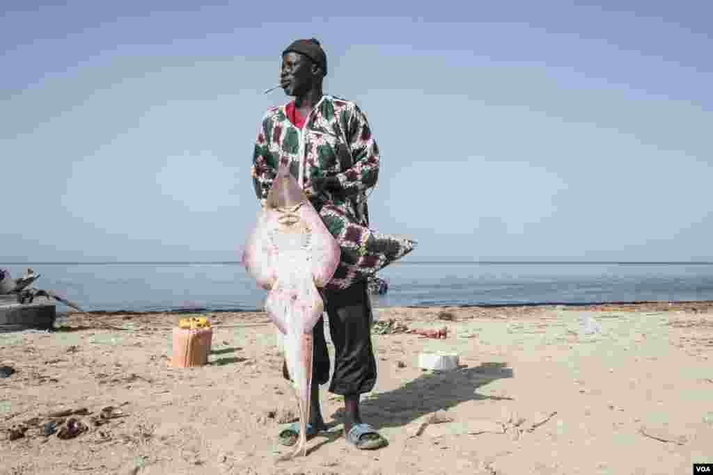 "Mamadou Ba poses for a portrait with a ""guitar"" ray. He calls the others electric rays. He has been cutting, drying and selling rays for decades. Joal, Senegal, May 30, 2017. (R. Shryock/VOA)"