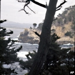 Point Lobos Underwater Reserve is one of nine protected marine areas along the California coast.