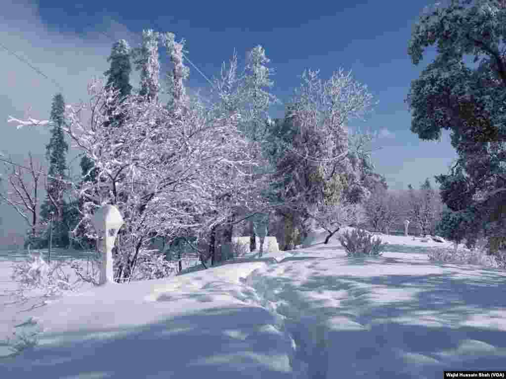 برف باری کے بعد وادی مری میں درختوں نے جیسے سفید چادر اوڑھ لی ہے۔