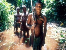 A Pygmy hunting expedition … But the authorities in Central Africa say their way of life is 'primitive' and they must become 'civilized'