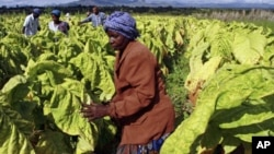 Bulawayo, Harare and Gweru have been hard hit by the job loses.