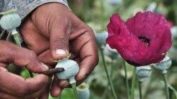 U.S.-Mexico Combatting Drug Scourg