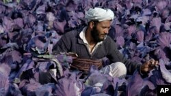 Mozori Sharif, Afg'oniston