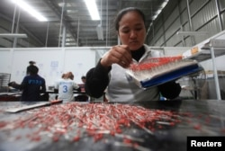 FILE - A woman works at a Japanese owned factory at the Phnom Penh Special Economic Zone (PPSEZ), on the outskirts of Phnom Penh, Dec. 17, 2014.