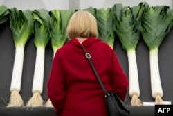 A woman looks at leeks in England's National Leek Championships in 2015.