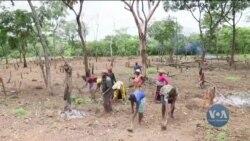 Безпрецедентні зміни клімату ставлять під загрозу харчову безпеку планети - ООН. Відео