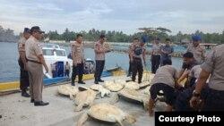 Penyu sisik (Eretmochelys imbricata) jelang diangkut dengan kapal Direktorat Polisi Perairan dan udara (Ditpolairud) Polda Sulawesi Tengah untuk dilepaskan di teluk Palu (10/12/2019) Foto : Humas Polda Sulawesi Tengah