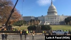 歷經3460英里國會聖誕樹抵達華盛頓