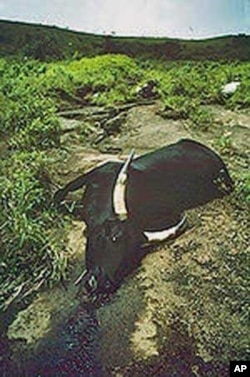 35,000 livestock and nearly 2,000 people died in August 1986 when Lake Nyos released over a millions tons of carbon dioxide.