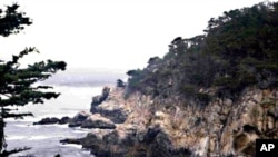 Point Lobos State Reserve is a sanctuary for thousands of sea and shorebirds.