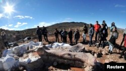 Residents and technicians look at the bones of a dinosaur at a farm in La Flecha, west of Argentina's Patagonian city of Trelew, May 16, 2014. Paleontologists have unearthed in Argentina what they say is the largest set of remains of a dinosaur ever found